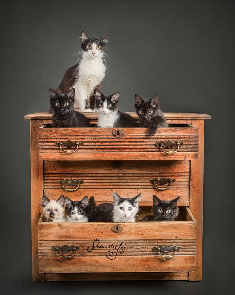 Kittens final